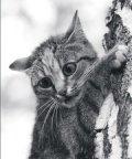 Помощь населению и кошкам.