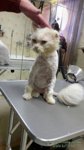 Зоозащитников из Озёрска обвинили в порче чужого имущества – в кастрации кота