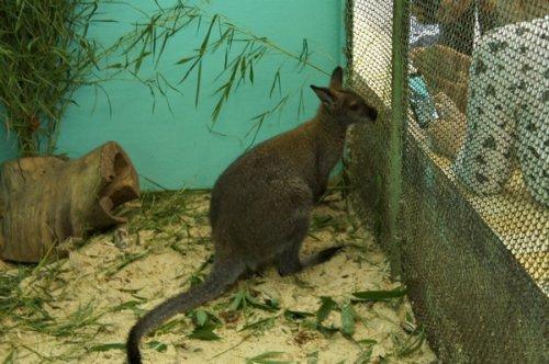Воспитанникам озёрского детского эколого-биологического центра подарили кенгуру. Фоторепортаж