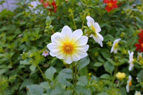 Цветочный фестиваль в Кыштыме: обзор события